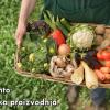 HČSP NUDI REFORME POLJOPRIVREDE: Zaokret prema organskoj proizvodnji, potpuna zabrana GMO-a, zabrana djelovanja Monsanta…